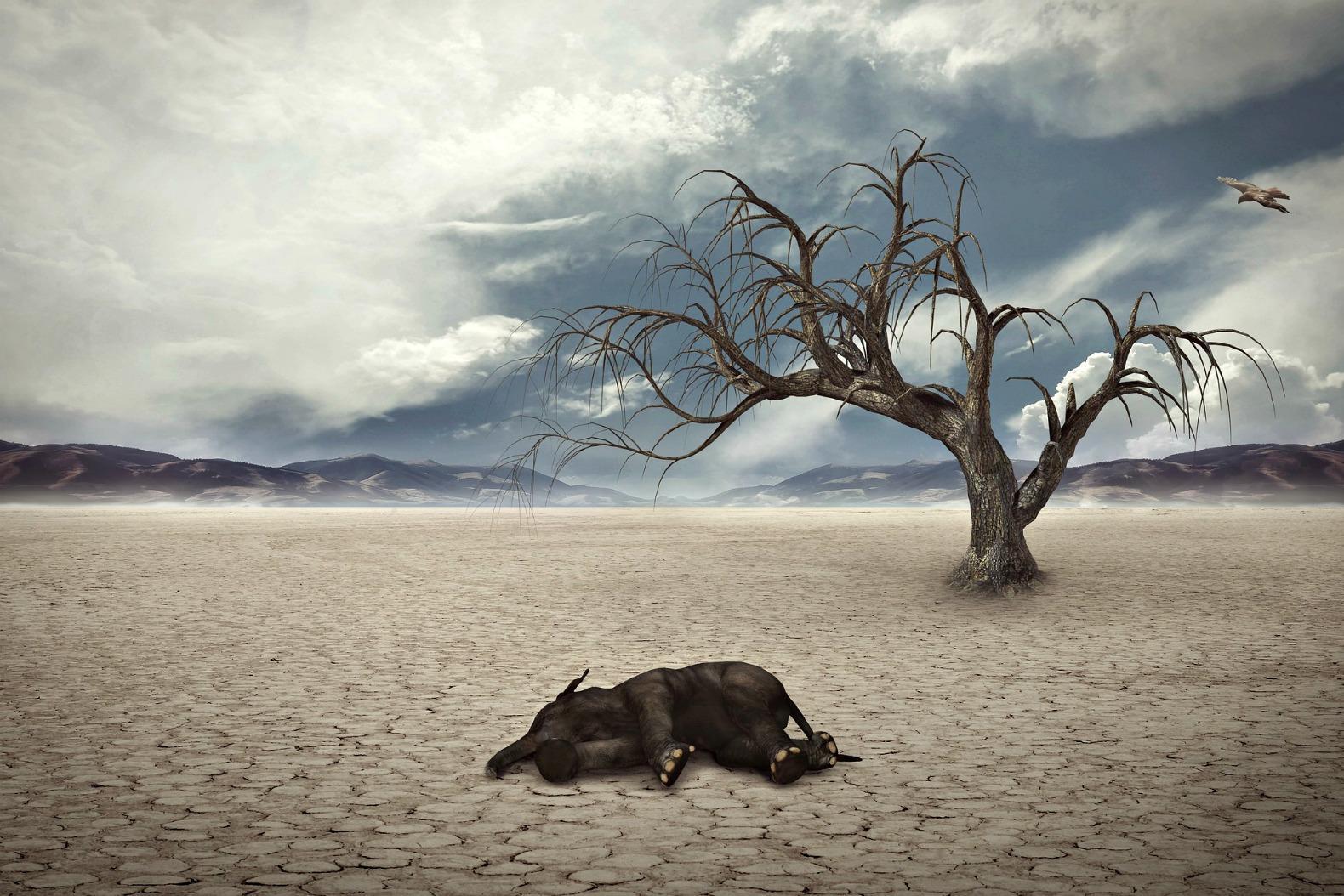Люди ускоряют вымирание животных