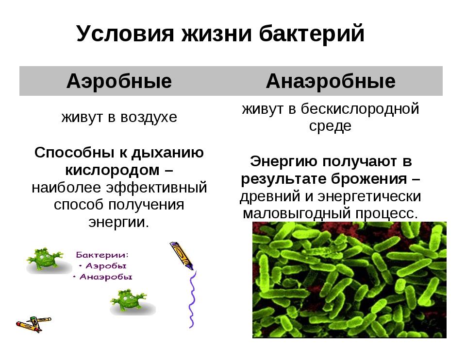 Условия жизни бактерий