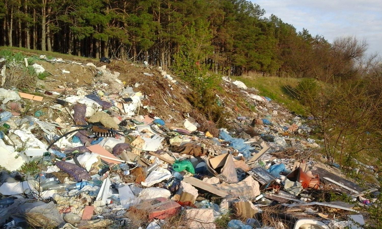 Загрязнение леса человеком