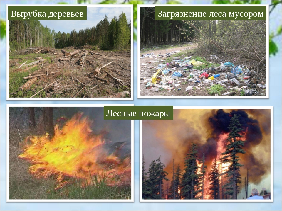 Последствия загрязнения леса