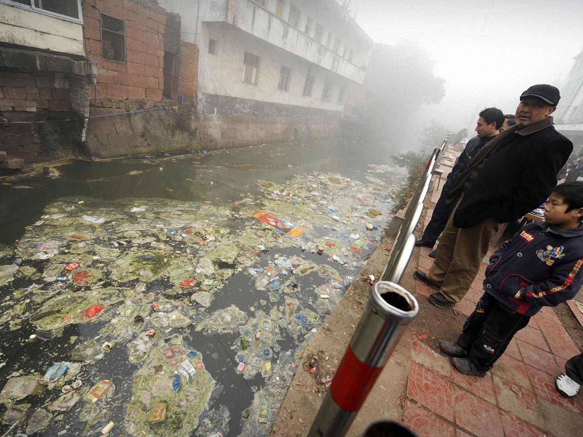 последствия экологических проблем