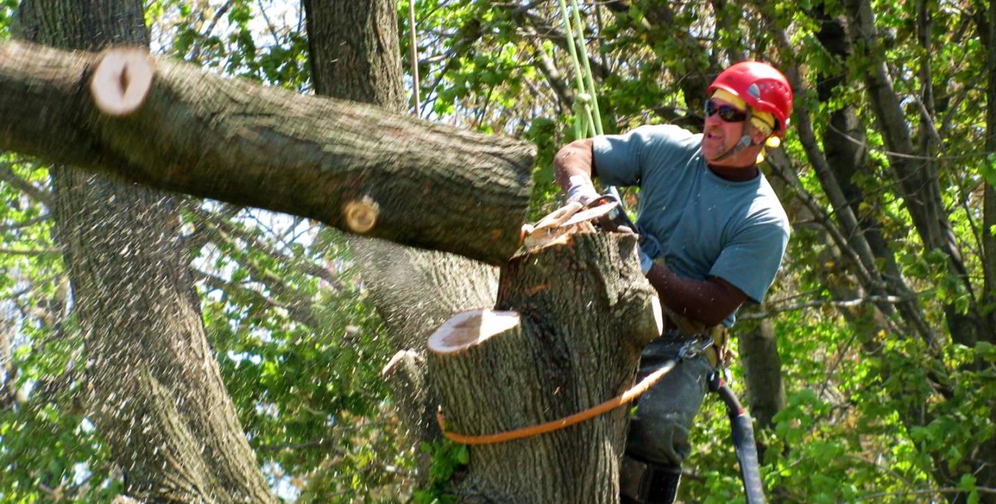 Варианты распиливания деревьев