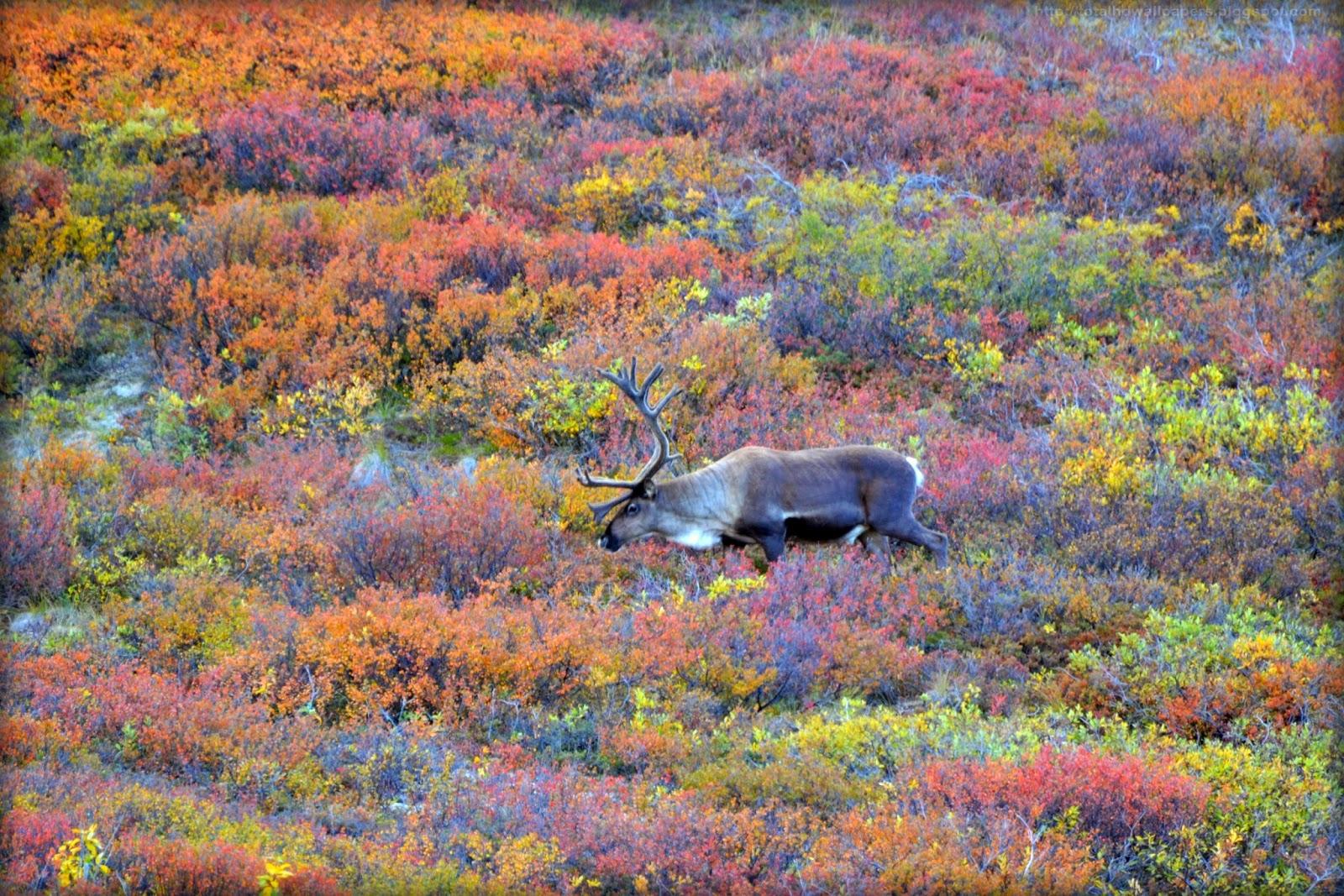 флора и фауна тундры