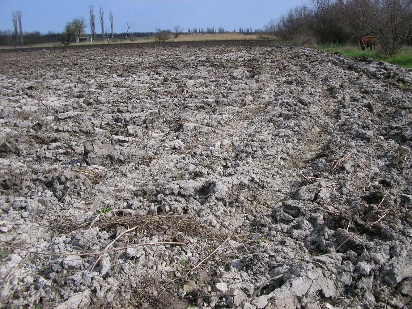 засоленная почва