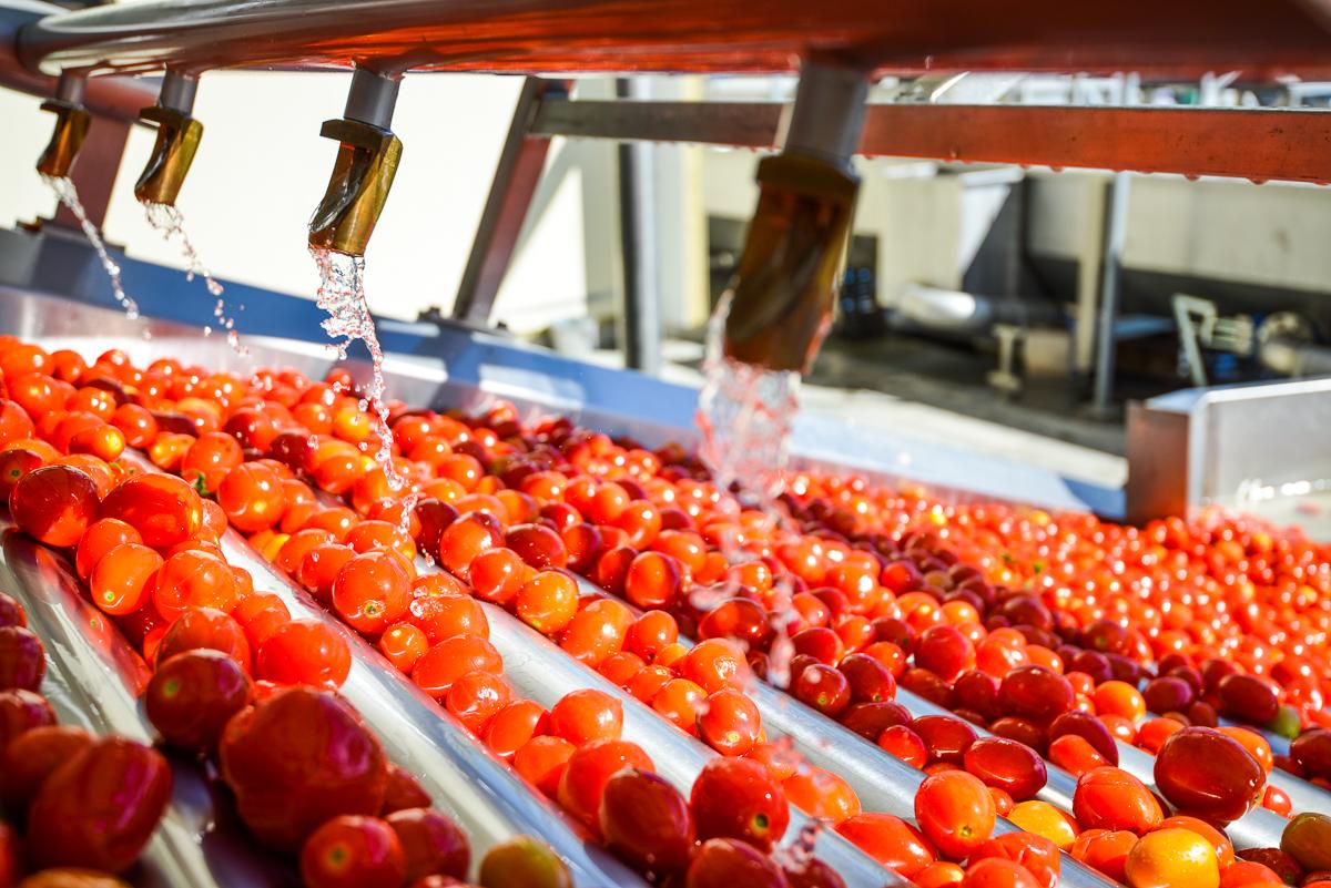 Переработка помидоров на заводе