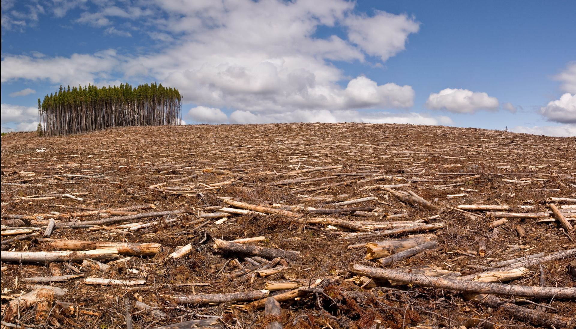 Гибель лесов