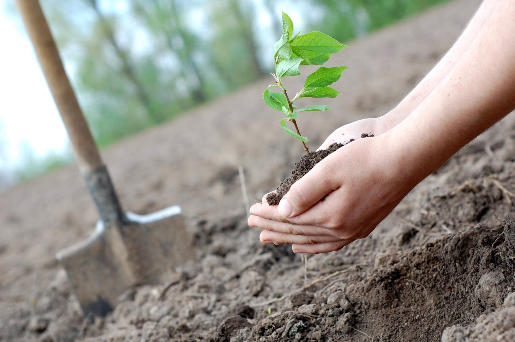 Экология как часть человека