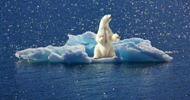 Экологические проблемы Арктики