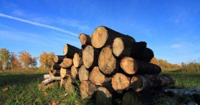 Вырубка лесов главная проблема Сибири