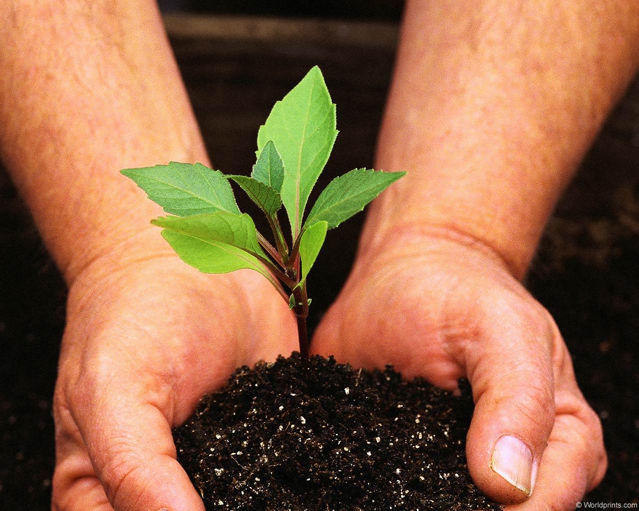 Мероприятия в защиту экологии