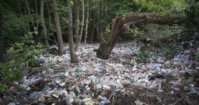 Загрязненный лес
