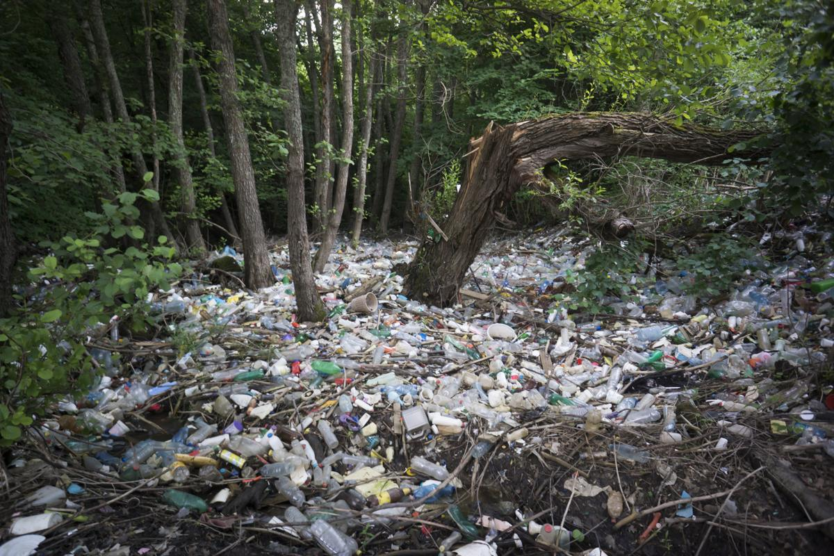 использовать это картинки засоренного леса шаг поэтапном уроке