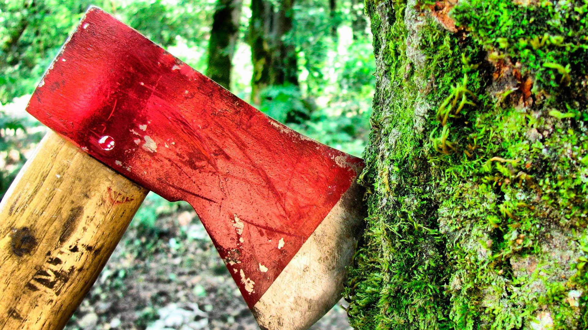 Вырубка лесов негативно сказывается на природе