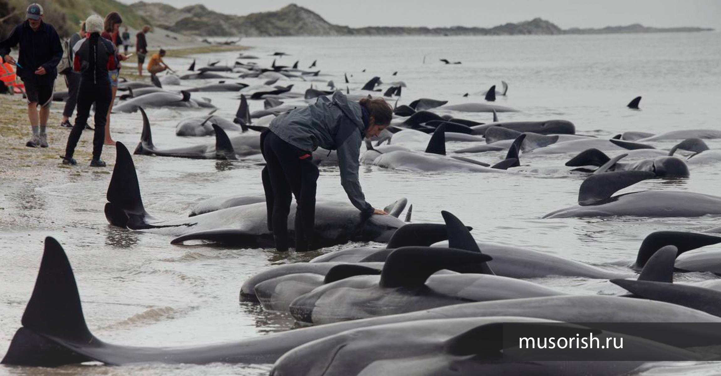 киты на берегу