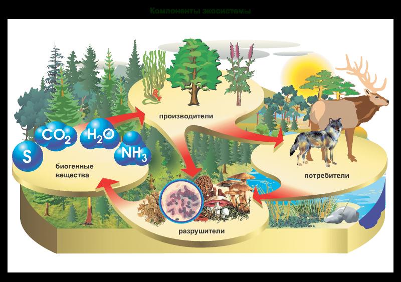 картинки экосистем для доу противном случае