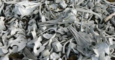 кости животных