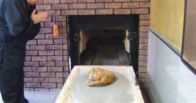 Кремация мертвых домашних животных