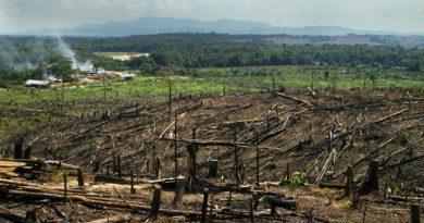 Проблемы уничтожения лесов