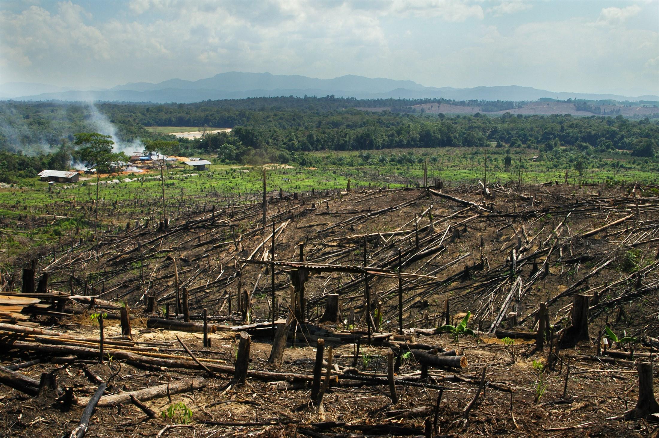 Картинки вырубка лесов экологическая проблема, рисунки