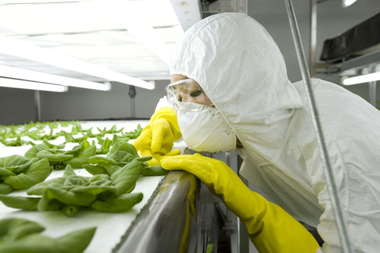 искусственное выращивание растений