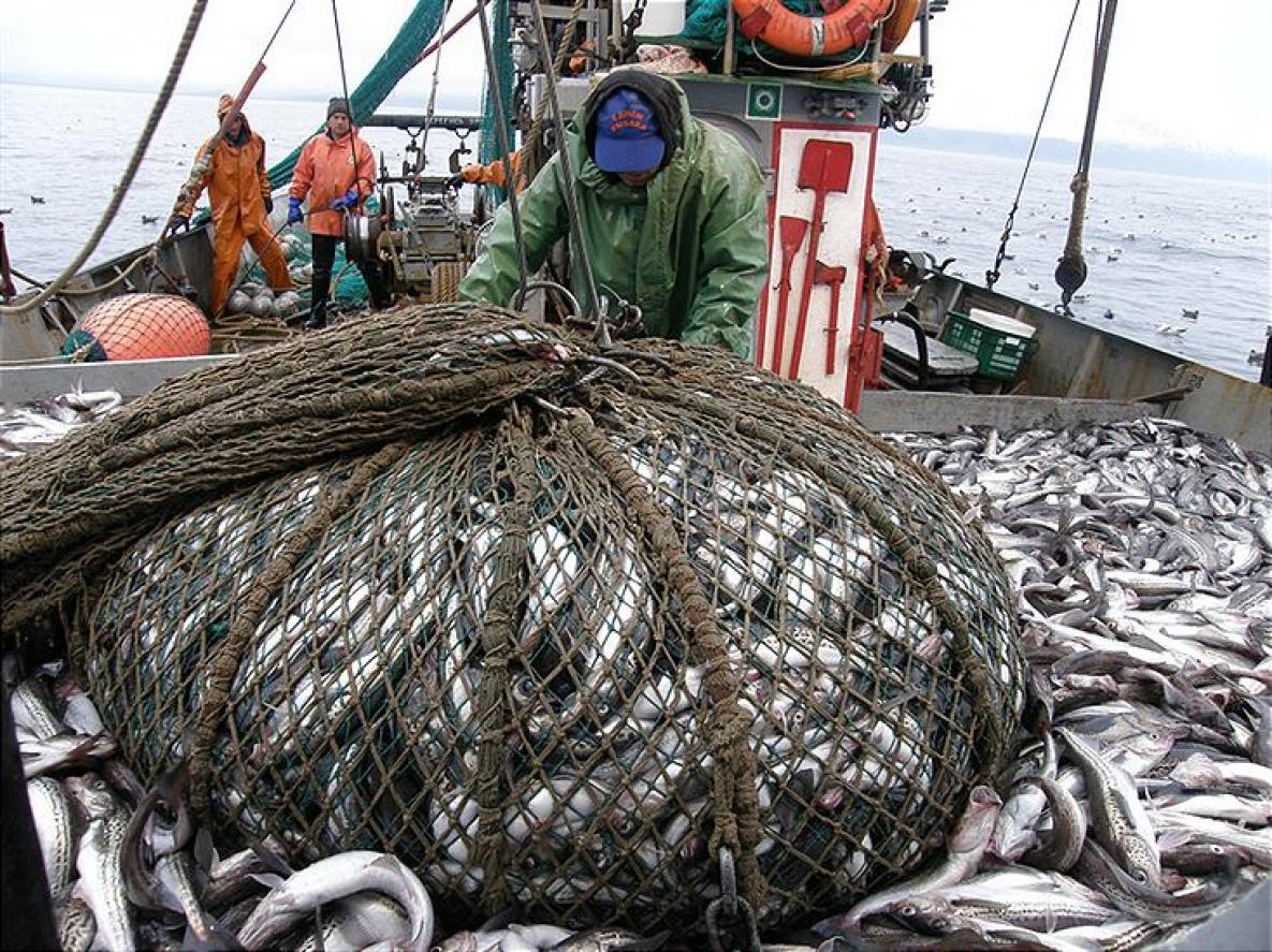 массовый вылов рыбы