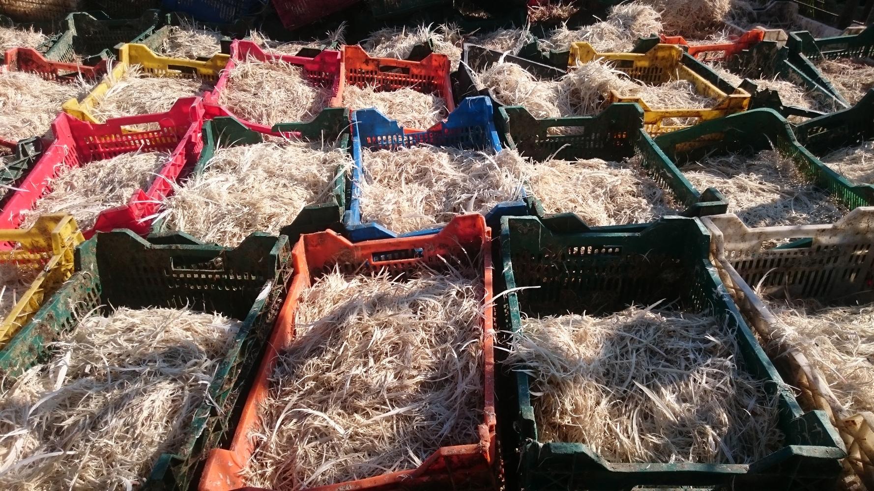 отходы на птицефабрике