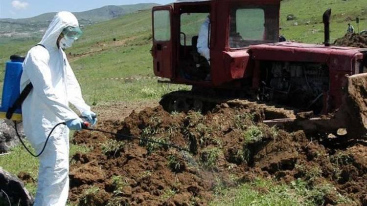 Загрязнение почвы пестицидами