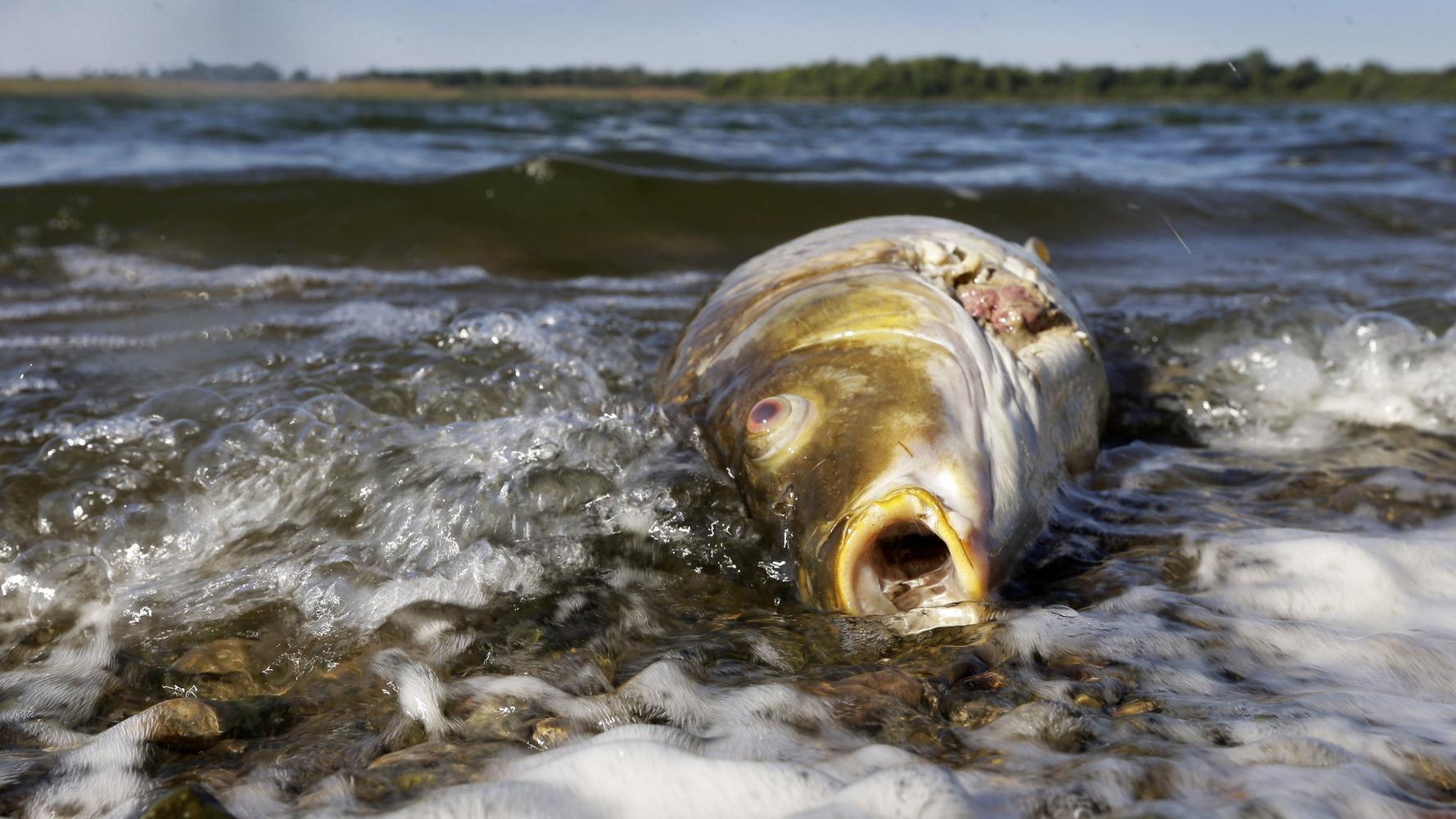 Картинки загрязненная вода