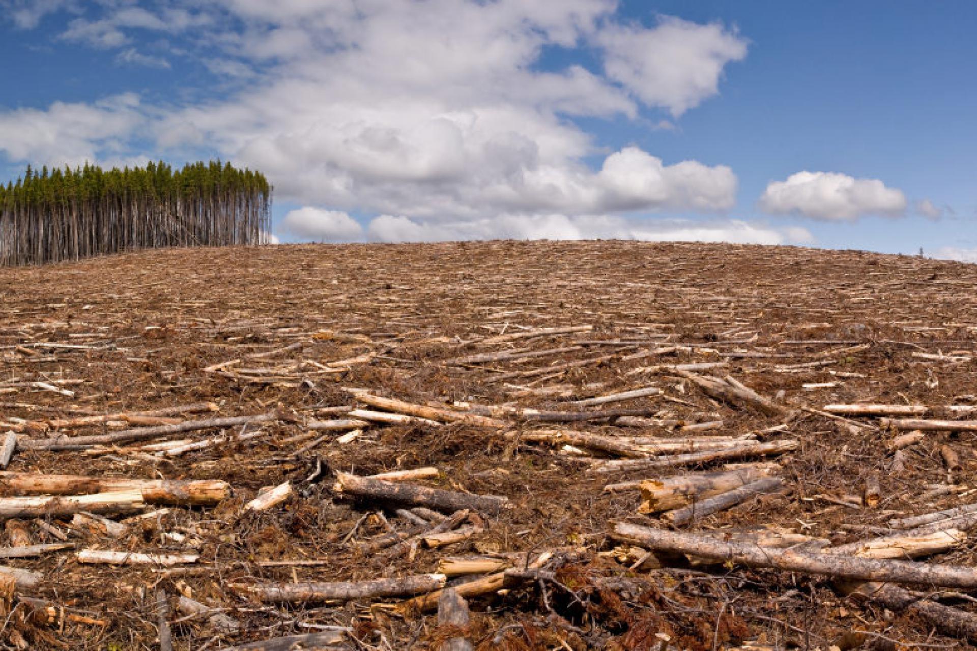 вырубка и гибель леса