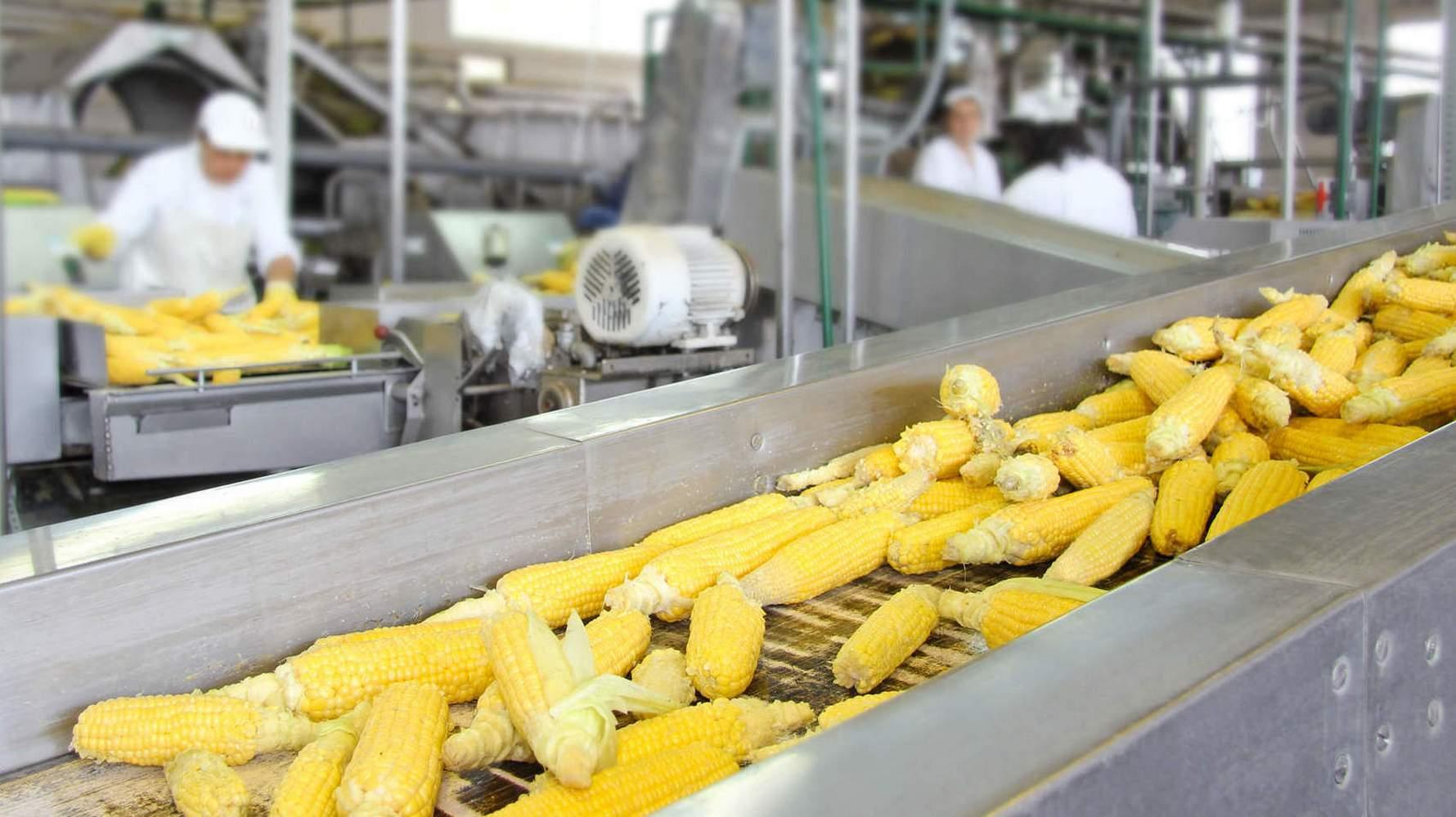 линия переработки кукурузы