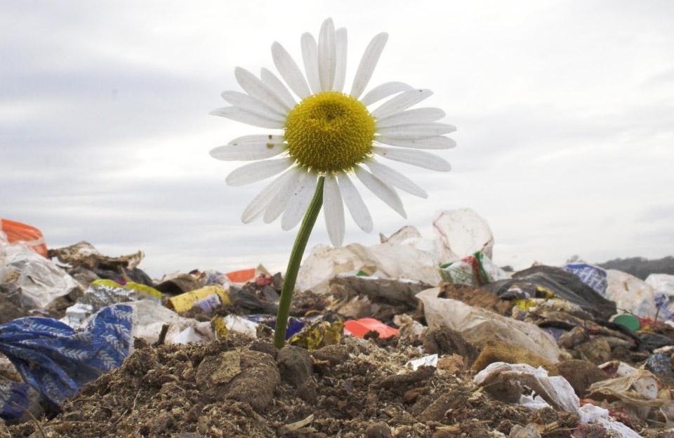 Загрязнение среды отходами производства и потребления