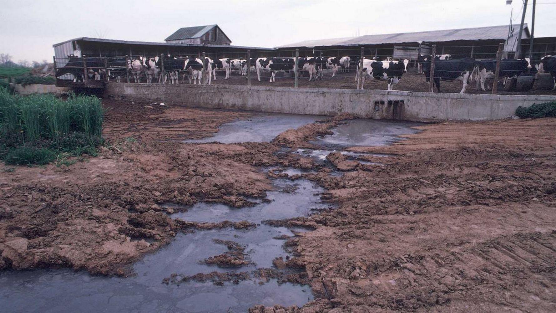 загрязнение воды сельским хозяйством