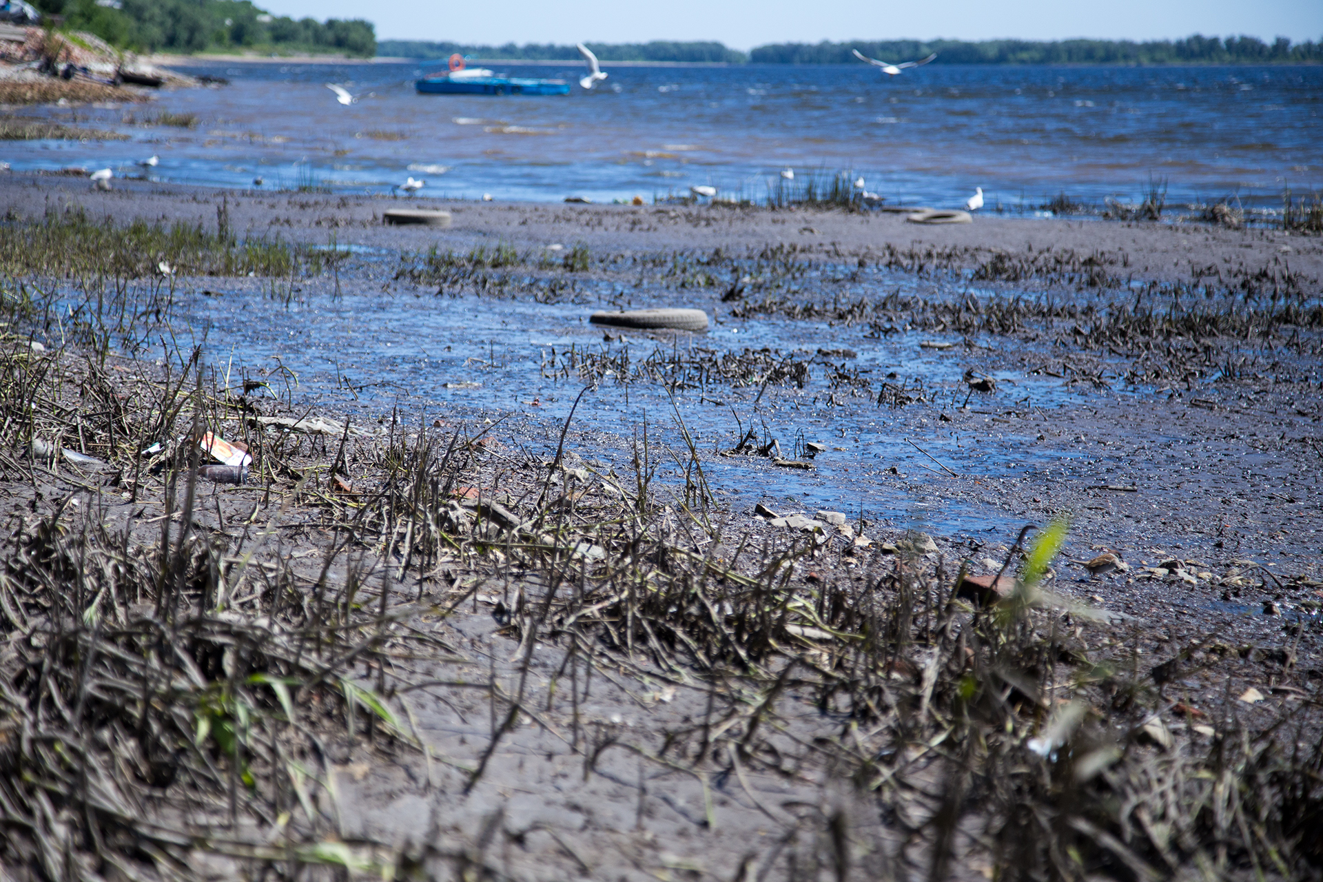Волга в Ульяновской области